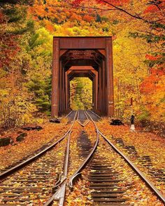 Two of my favourite things: fall and train tracks. So beautiful.