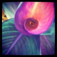 summer swirl