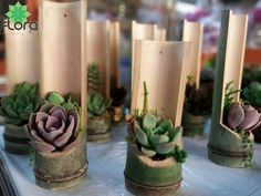 Creative and Modern Tips: Garden Ideas Vegetable Yards backyard garden design. Creative and Modern Tips: Garden Ideas Vegetable Yards backyard garden design. Succulent Gardening, Cacti And Succulents, Garden Planters, Planting Succulents, Garden Trellis, Vegetable Gardening, Bamboo Planter, Bamboo Art, Bamboo Crafts