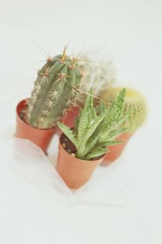 Trader Joe's Mini Green House Cactus is Cute :D: HAZZZEL Trader Joe's, Pretty And Cute, Cactus, Planter Pots, Mini, Green, House, Home, Homes