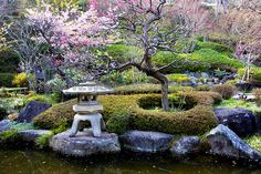 Japanese Garden With Flowering Plum Trees And Stone Lantern In Hasedera Buddhist Temple, Kamakura, Japan, unlicensed use prohibited