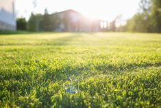 Green Lawn, Green Grass, Lush Green, Grass Seed Types, Planting Grass, Planting Seeds, Organic Lawn Care, Soil Texture, Lawn And Landscape