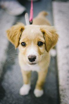 Baby! Puppy.  Cute Animals. www.livewildbefree.com Cruelty Free Lifestyle & Beauty Blog. Twitter & Instagram @livewild_befree