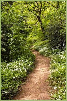 🇬🇧 Wild garlic in the woods (North Yorkshire, England) by feather cr. Forest Path, Woodland Garden, Walk In The Woods, All Nature, English Countryside, Pathways, Garden Paths, Beautiful Landscapes, The Great Outdoors