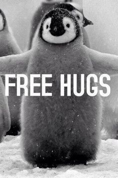 Free hugs, everyone! :3 #penguin #cute ~