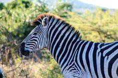 Amazing animal facebook.com/Parrottspics