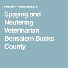 Spaying and Neutering Veterinarian Bensalem Bucks County