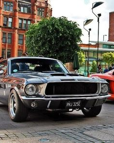 Ford: Ford Mustang … Sports and Muscle Mustang Shelby Cobra, Mustang Girl, Ford Mustang Fastback, Ford Gt, Ford Mustang Shelby, Mustang Bullitt, Shelby Gt, Ford Mustangs, Classic Mustang