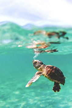 65 Baby Animals That Can Fill Your Heart With Joy Baby Care baby turtle care Cute Turtles, Baby Turtles, Sea Turtles, Ocean Turtle, Animals Crossing, Turtle Care, Cute Baby Animals, Animals Sea, Nature Animals