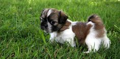 Saiba as dicas que você precisa para o treinamento do cão com sucesso!