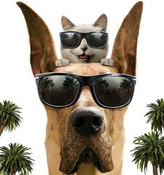 Animals with sunglasses - photo#9