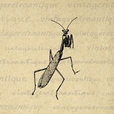 Digital Graphic Praying Mantis Image Insect by VintageRetroAntique