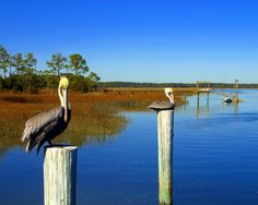 hilton head island wildlife - Google Search