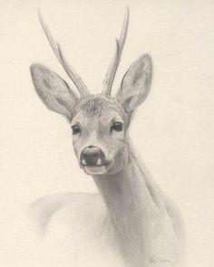 Renso Tamse - 'Roe buck'