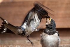 More from Swallow TV..., via Flickr.
