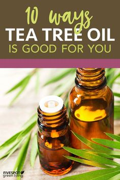 10 Ways Tea Tree Oil is Good for Your Health - Five Spot Green Living Cold Home Remedies, Herbal Remedies, Health Remedies, Natural Remedies, Natural Treatments, Tea Tree Essential Oil, Essential Oil Uses, Tea Tree Oil Uses, Oil Benefits