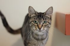 Margaux | Pets Available | PAWS Chicago