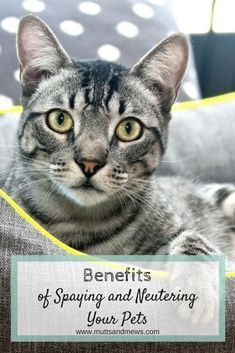 Whether Youve Recen Catscarehacks Cat Illnesses Cat Training Kitten Care