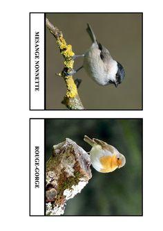 Imagier des oiseaux de chez nous - Page 2