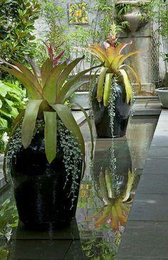 Jarrones en espejo de agua