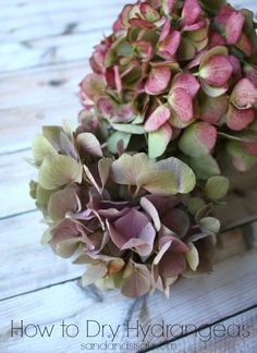 Hortensia - How to Dry Hydrangeas - for year round decorating! Hortensia Hydrangea, Hydrangea Bloom, Hydrangea Not Blooming, Hydrangea Garden, Do It Yourself Organization, Little Presents, Deco Floral, Dried Flowers, Garden Plants