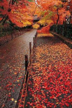 Beautiful Autumn Entrance!