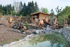 Mongolische Steppe, Zoo Zürich, Zürich, Switzerland by vetschpartner Landschaftsarchitekten