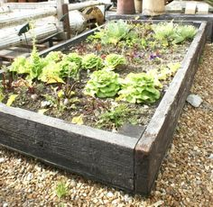 Raised bed scaffold planks for use in the garden Hillside Garden, Edible Garden, Garden Planters, Vegetable Garden, Raised Planter, Raised Garden Beds, Raised Beds, Garden Makeover, Garden Projects