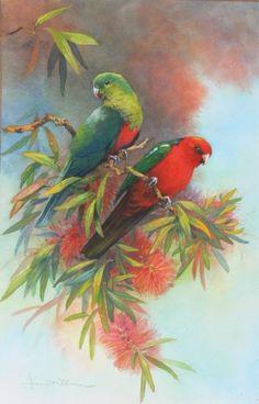 Australian King Parrot Picture by Australian Bird and Wildlife Artist Janet Flinn Australian Painting, Australian Artists, Bird Drawings, Animal Drawings, Australian Parrots, Parrot Painting, Bird Applique, Wildlife Paintings, Bee Art