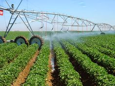 Pregnant women who lived in close proximity to fields and farms where chemical pesticides were applied experienced a two-thirds increased ri...