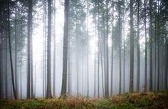 hinterland-haze-forest-mural-plain
