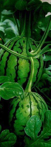 green                                                       …                                                                                                                                                                                 Más