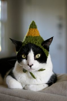 There's something missing from my cat. What is it? He needs just a little something..I know! I'll knit him a Buddy The Elf hat!