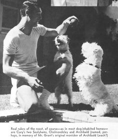 10 candid photos of Old Hollywood stars and their dogs Fox Terriers, Wire Fox Terrier, Bull Terrier, Old Hollywood Stars, Classic Hollywood, Hollywood Icons, Westies, Westie Dog, Sealyham Terrier