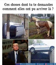 Funny Donald Trump Memes: Do You Ever Wonder? Memes Humor, Funny Memes, Jokes, Funny Political Memes, Political Satire, Donald Trump Pictures, Funny Cute, Hilarious, Funny Posts