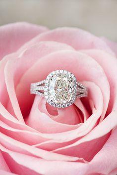 Triple split shank Halo set cushion cut diamond ring.