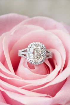 Triple split shank Halo set cushion cut diamond ring.