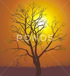 Walnut tree sunset