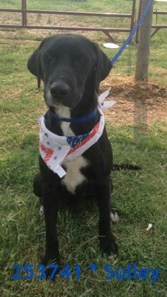 Sa,tx- Sulley needs a foster or forever home by 7pm Monday 5/20! Email placement@sanantoniopetsalive.org to help, foster, adopt or rescue