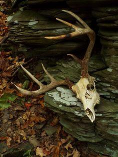 Throne of the Fallen by LeeAnn Hughes-Mastin Animal Skeletons, Animal Skulls, Crane, Animal Bones, Southern Gothic, Deer Skulls, Vulture, Skull And Bones, Dragon Age