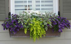 Summer window box
