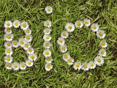 JacqDoo blogt | Is er markt voor bio-bloemen? #Biologische bloemen. #Bisselingskaat