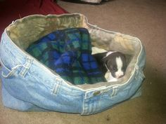 Repurposed jeans turned into cool dog bed! Just depends on the size of the dog or jeans.