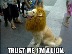 Trust Me Im A Lion