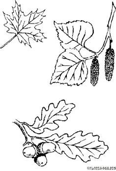 Falevél kifestők (leaves) - mivagyunk.lapunk.hu Leaf Coloring Page, Coloring Pages For Kids, Journal Covers, Book Journal, Scroll Pattern, Types Of Craft, Digital Stamps, Printable Coloring Pages, Gourds