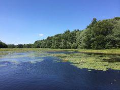 A Monet moment. #newengland #summer