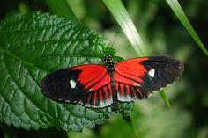 Papillon, Jardin, Nature