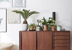 da daa blog / green interior