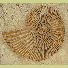 Randění fosílií a hornin