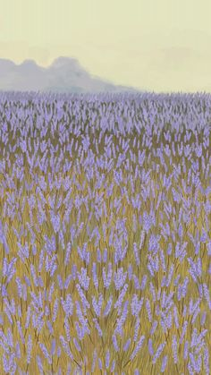 Download premium vector of Blooming lavender garden mobile phone wallpaper vector by marinemynt about lavender, purple flower nature, landscape painting, mobile phone wallpaper flower field, and floral phone background 2043962